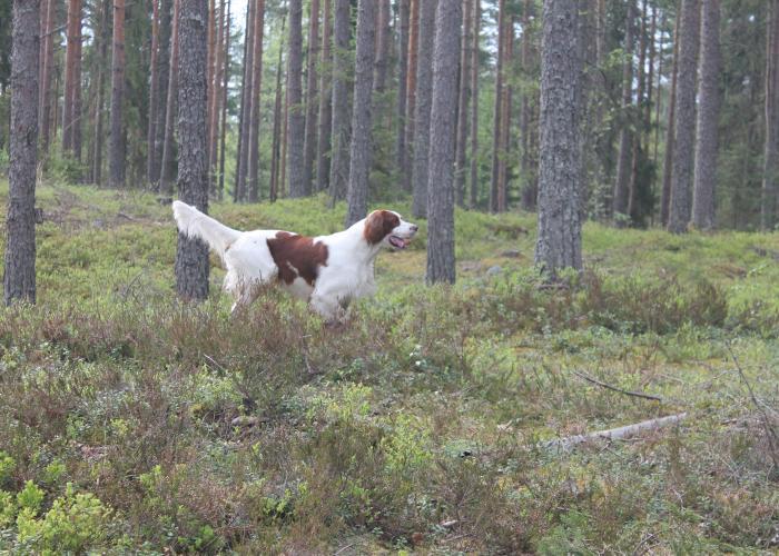 113--luksu_metsässä--main.jpg