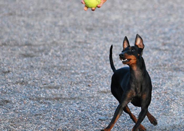 301--koira.jpg
